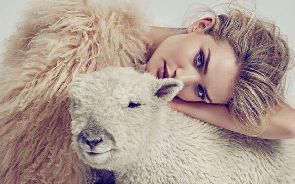 MM和羊驼