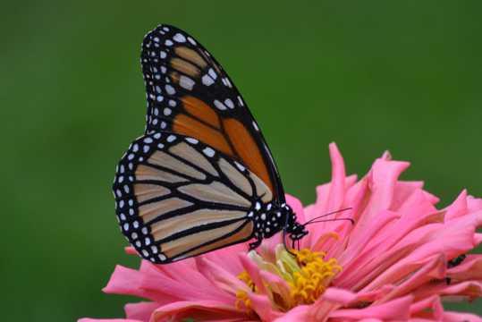 花卉了上好看蝴蝶图片