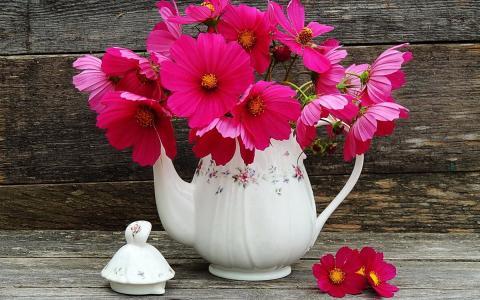 静物与粉红色的波斯菊壁纸和背景