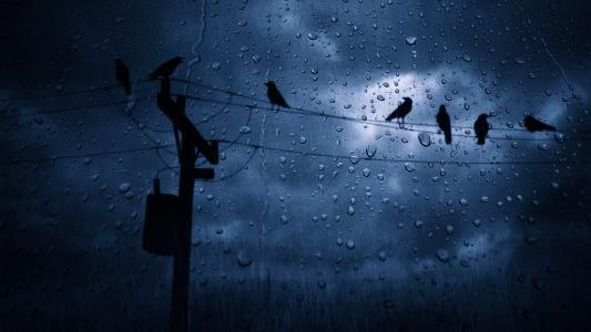 在雨中的鸟4k超高清壁纸和背景