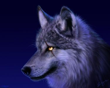 狼壁纸和背景