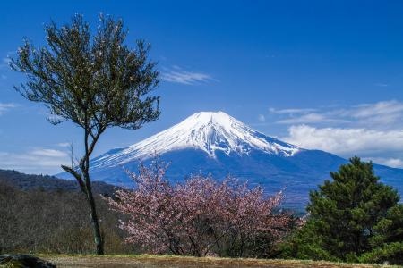 富士和樱花春'15 4k超高清壁纸和背景