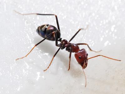 蚂蚁壁纸和背景