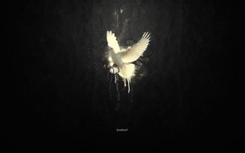 和平鸽壁纸和背景