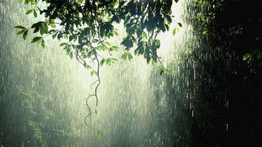 下雨在森林里全高清壁纸和背景