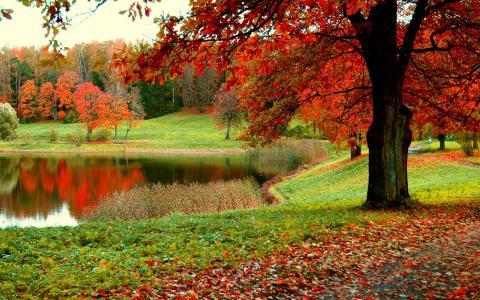 秋天公园全高清壁纸和背景
