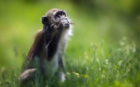 猕猴全高清壁纸和背景