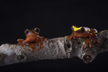 青蛙5k视网膜超高清壁纸和背景