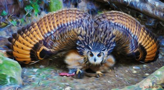 OWL全高清壁纸和背景