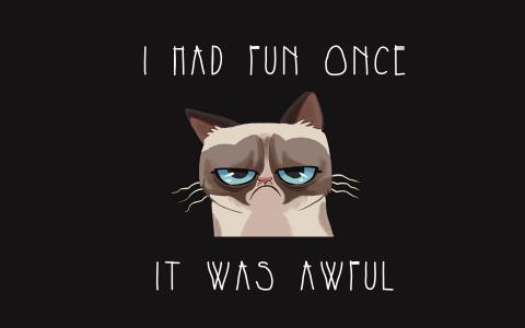 脾气暴躁的猫全高清壁纸和背景图像
