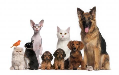 可爱的动物家庭5k视网膜超高清壁纸和背景