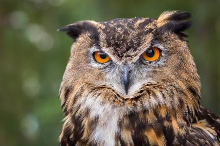 猫头鹰5k视网膜超高清壁纸和背景