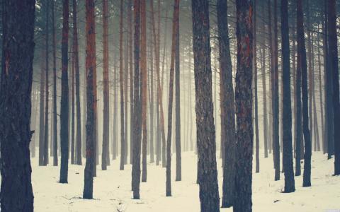 冬季全高清壁纸和背景图像