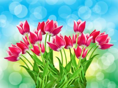 粉红色郁金香5k视网膜超高清壁纸和背景图像
