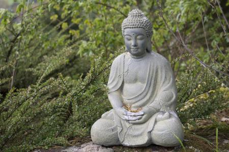 布什花园4k超高清壁纸和背景中的佛