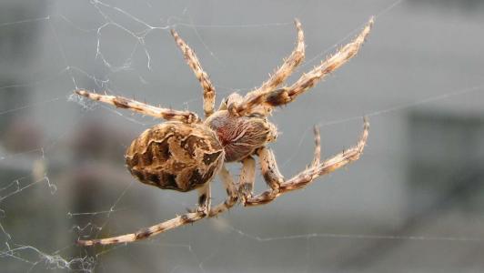 蜘蛛壁纸和背景