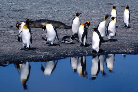 企鹅全高清壁纸和背景