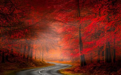 朦胧的秋季森林路全高清壁纸和背景图像
