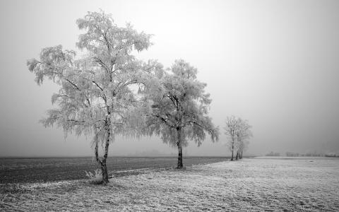 黑与白全高清壁纸和背景