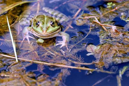 青蛙4k超高清壁纸和背景