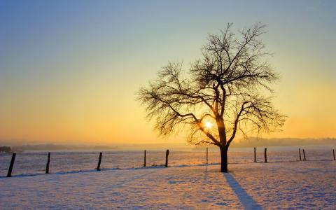 唯美雪季风光