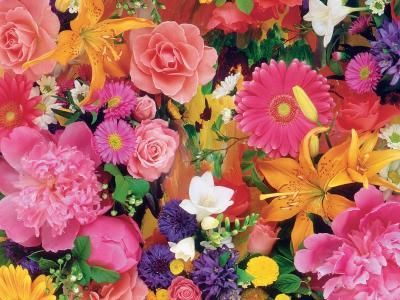 七彩花朵壁纸和背景图像