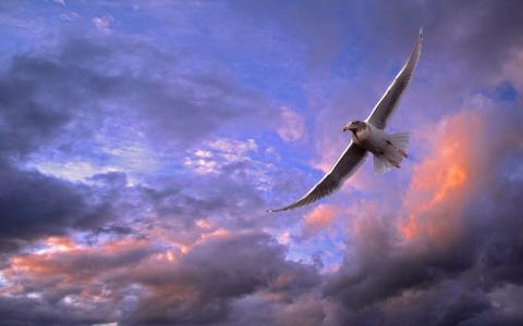 海鸥飞在日落全高清壁纸和背景