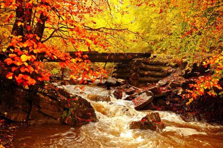 天然桥和流在秋季森林5k视网膜超高清壁纸和背景图像