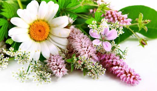 春天的花朵5k视网膜超高清壁纸和背景