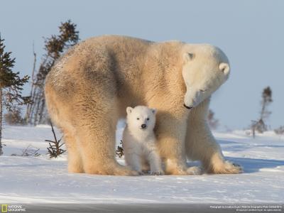 熊壁纸和背景