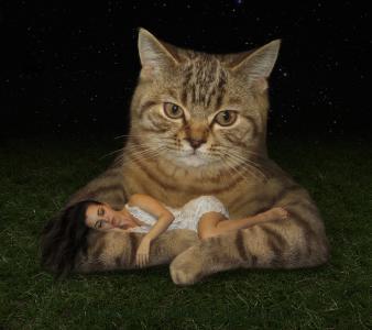女性在猫的爪子全高清壁纸和背景睡着了