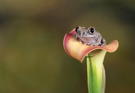 青蛙全高清壁纸和背景