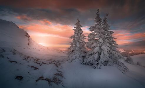 凛冬结束黎明将至
