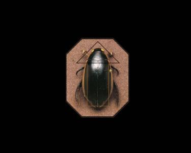 甲虫壁纸和背景