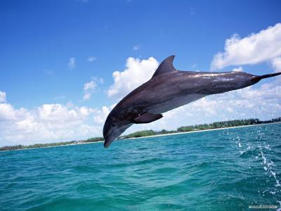 海豚壁纸和背景