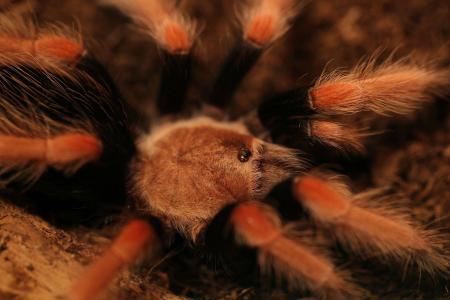 蜘蛛全高清壁纸和背景