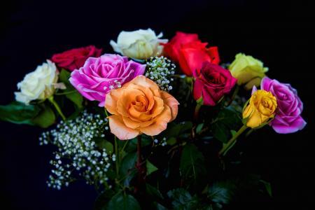 玫瑰花束全高清壁纸和背景