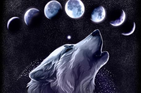 狼全高清壁纸和背景