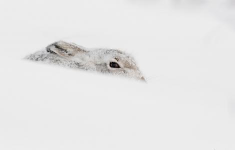 野兔全高清壁纸和背景