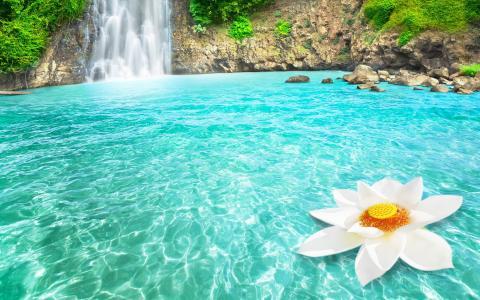 热带瀑布和白莲花全高清壁纸和背景