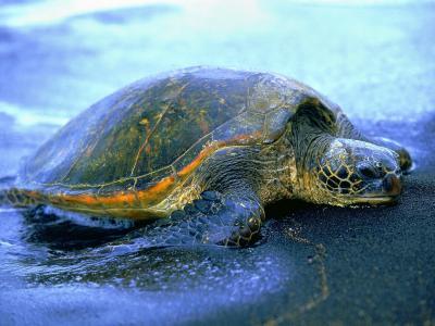 海龟壁纸和背景