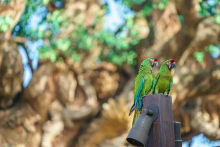 鹦鹉全高清壁纸和背景