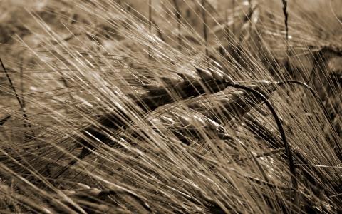 草全高清壁纸和背景图像