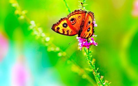 蝴蝶自然的颜色4k超高清壁纸和背景