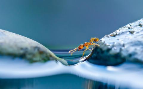 蚂蚁全高清壁纸和背景