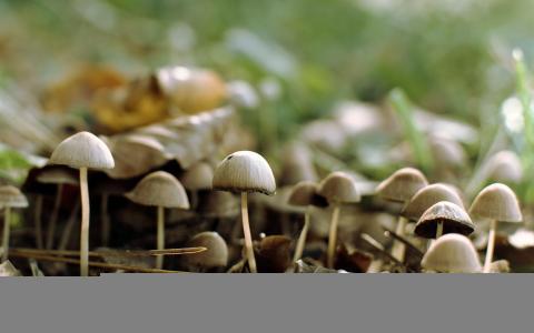 蘑菇全高清壁纸和背景图像