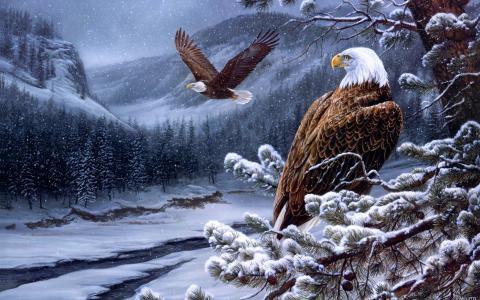鹰全高清壁纸和背景
