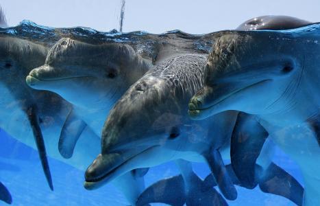 海豚全高清壁纸和背景