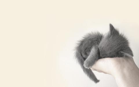 猫壁纸和背景