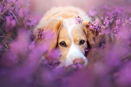趴在花丛中的小狗